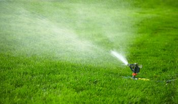 how often should i water my grass