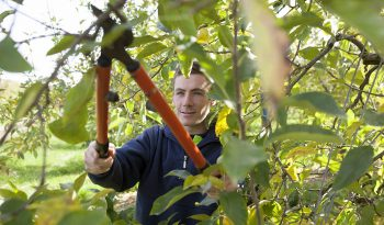 Pruning Trees and plants
