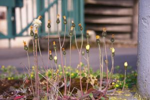 professional landscaping weeding tips for your lawn and garden