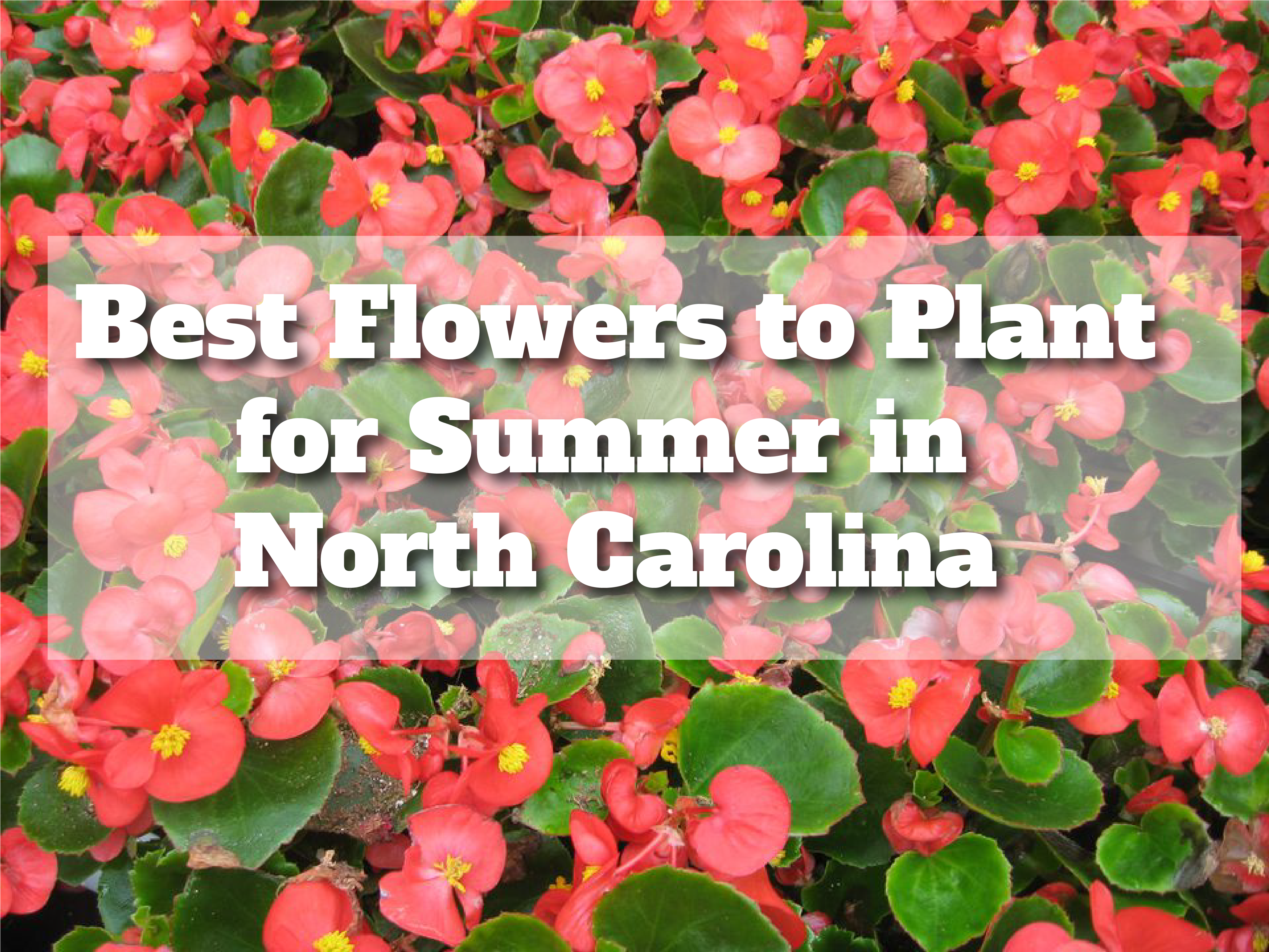 Best Flowers To Plant For Summer In North Carolina The Heffner